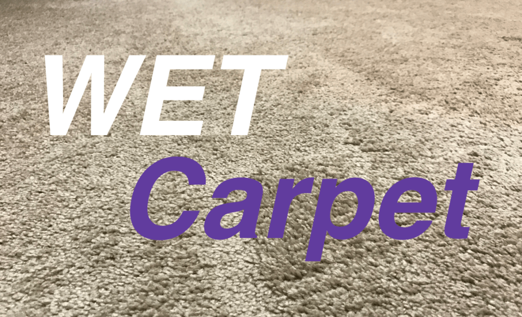 Can You Vacuum Wet Carpet Don T Do It Them Vacuums
